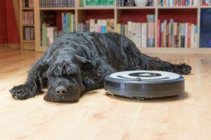 robot aspirateur et chien
